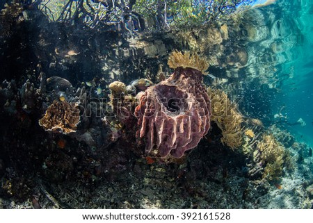 A barrel sponge and other marine invertebrates grow along the shallow edge of a mangrove forest in Raja Ampat, Indonesia. This remote region harbors a diverse array of marine habitats and species. - stock photo