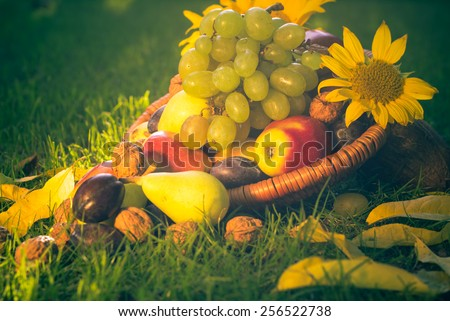 A basket full of fruits on grass in the sunset light - stock photo