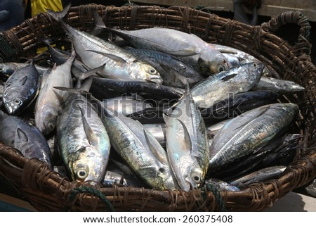 A basket of fishes just caught - stock photo