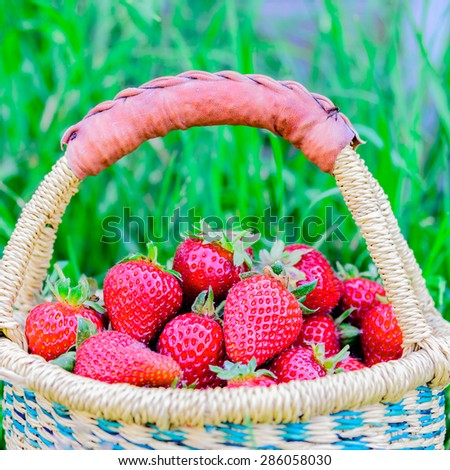 A basket of fresh organic strawberries with green grass background. These strawberries are handpicked from an organic farm in Puyallup, Washington State, US.  - stock photo
