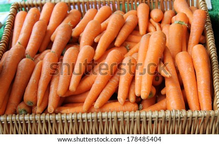 A Basket of Freshly Harvested Vegetable Carrots. - stock photo