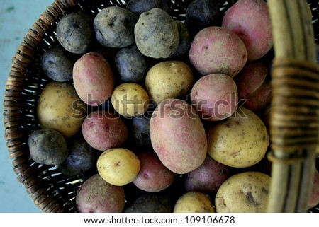 a basket of potatoes - stock photo