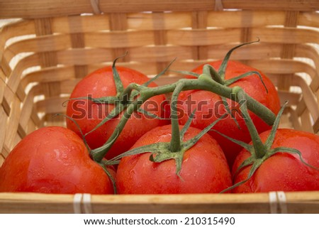 a basket of tomatoes with a sprig. healthy food - stock photo