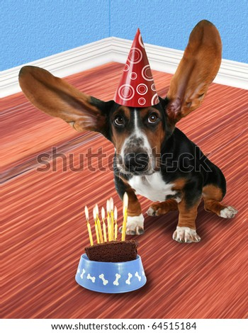 a basset hound with a piece of cake
