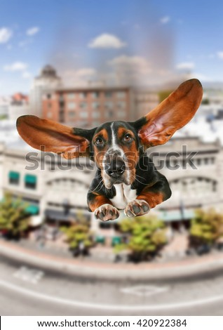 a basset hound with giant flapping ears flying over a city like a super hero dog toned with a vintage retro instagram filter effect app or action - stock photo