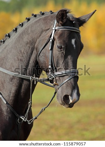 A bay thoroughbred horse head in front of autumn trees