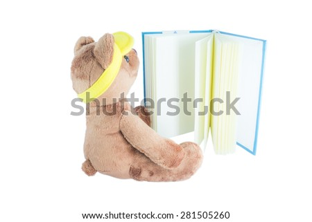 a bear is reading a book - stock photo