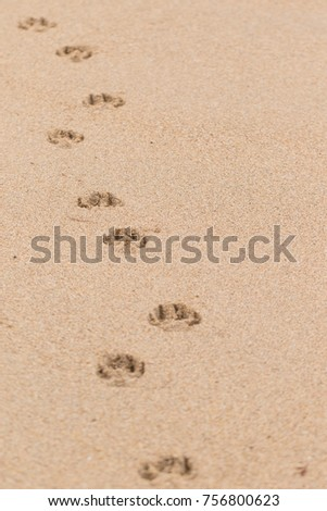 A Beautiful and funny Dog paws marked on the beach