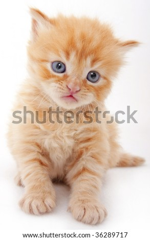 A beautiful baby cat that is very curious - stock photo