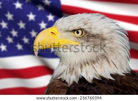 a beautiful bald eagle with a background of a usa flag - stock photo
