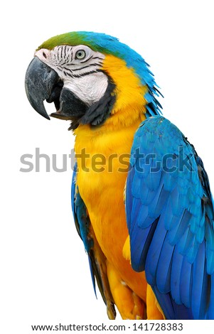 A beautiful bird Blue and Gold Macaw isolate on white background.