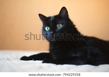 A beautiful black cat with large yellow eyes lies on a plaid.