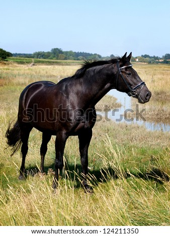 A beautiful black horse stands up on the top of a hill