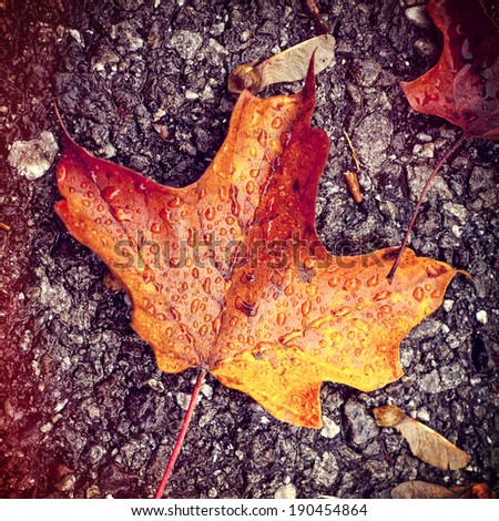 A beautiful, bright, maple leaf, wet from the rain, on concrete ground, instagram filter style - stock photo