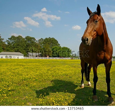 A beautiful brown horse grazes in a paddock full of wild flowers