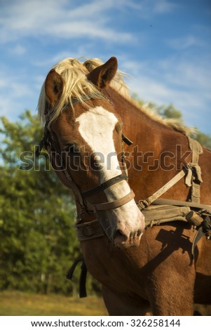 A Beautiful Brown horse in the pasture - stock photo