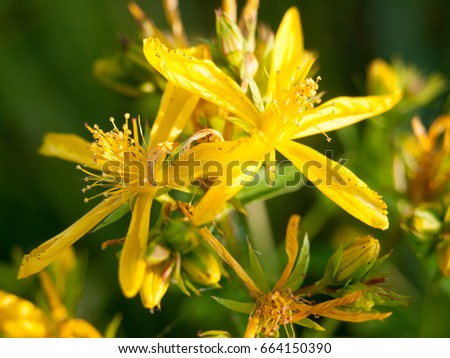 a beautiful bunch of yellow flower heads outside close up