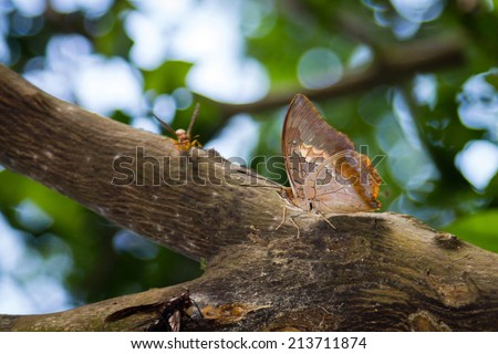 A beautiful butterfly on a tree branch