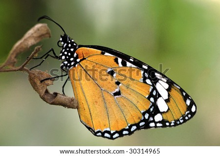 A beautiful butterfly perching on a tree branch - stock photo