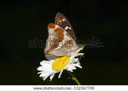 A beautiful butterfly pollinating a flower