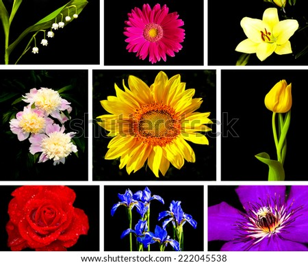 A beautiful collection of decorative flowers on a black background. - stock photo