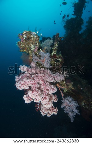 A beautiful coral scenery on top of the famous Liberty shipwreck in Tulamben Bali - stock photo