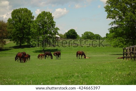 A beautiful farm with horses grazing in the grass with their newborn foals.