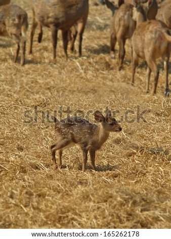 a beautiful fawn standing on dry grass