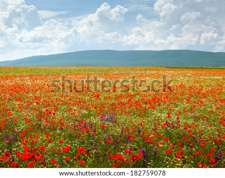 A beautiful field of flowers on a background of mountains and clouds - stock photo