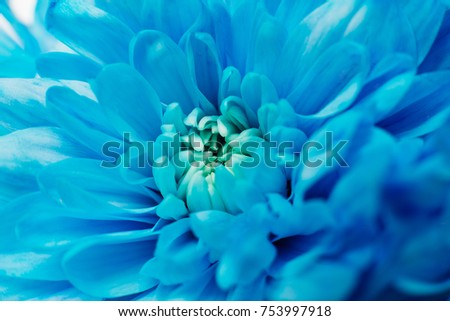 A beautiful flower of blue is lying on a white table isolated