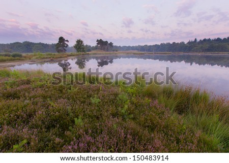 A beautiful foggy morning with blooming heather in late summer - stock photo