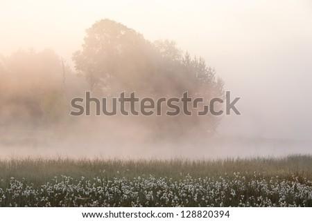A beautiful foggy sunrise in spring - stock photo