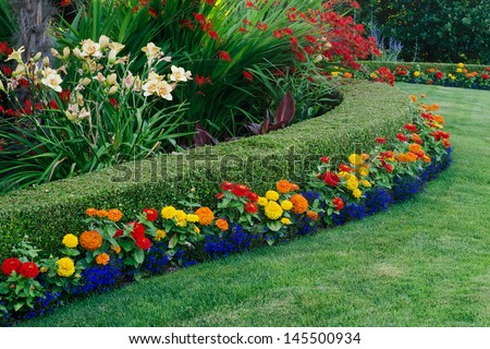 A beautiful garden display featuring a curved boxwood hedge surrounded by daylilies, crocosmia, and small colorful zinnias and lobellia. - stock photo