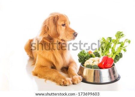 a beautiful golden retriever dog looking at a bowl of vegetables