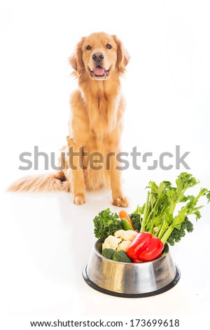 A beautiful golden retriever sitting next to a bowl of fresh vegetables - stock photo