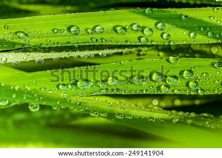 A beautiful green leaf background with water drop. - stock photo