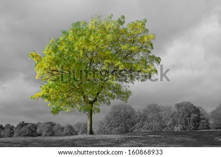 A beautiful green tree against a black & white stormy sky