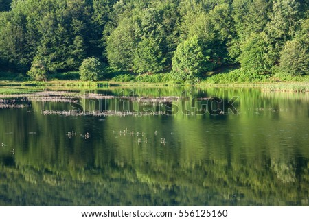 A beautiful green wood reflected on a small lake.
