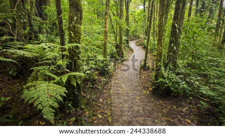 A beautiful jungle footpath from within the dense Costa Rican rain-forest. - stock photo