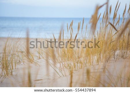 A beautiful landscape of dunes on the coastline of Baltic sea