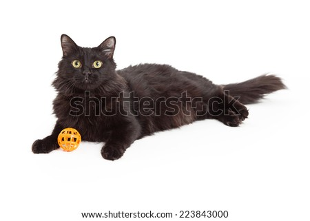 A beautiful long haired black cat laying while looking forward with orange toy between front paws