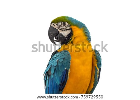 A beautiful macaw blue and yellow isolated on white background this has clipping path.