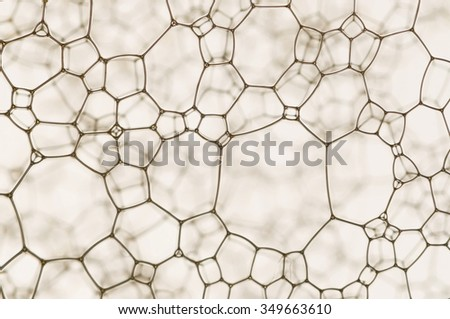 A beautiful micro web isolated over a blur background. - stock photo