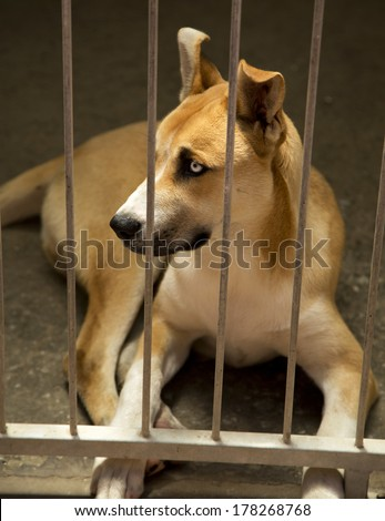 A beautiful mixed breed dog in an animal shelter - stock photo
