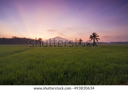 A beautiful morning at a paddy field in Ketereh, Kota Bharu, Kelantan. Soft Focus due to Long Exposure Shot