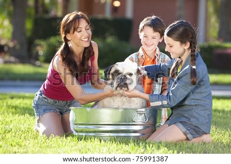 A beautiful mother, son and daughter family washing their pet dog, a bulldog outside in a metal tub. - stock photo