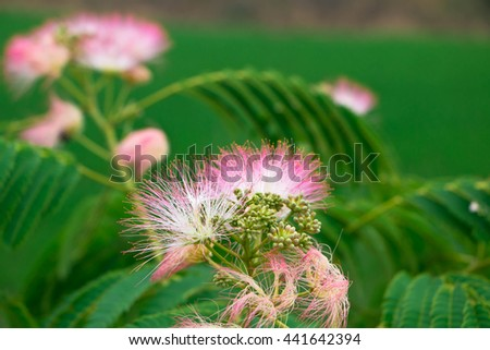 A beautiful pair of red fern flowers over a vivid green background.  - stock photo