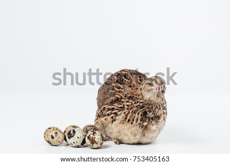 A beautiful pepper isolated on a white background sits on an egg table