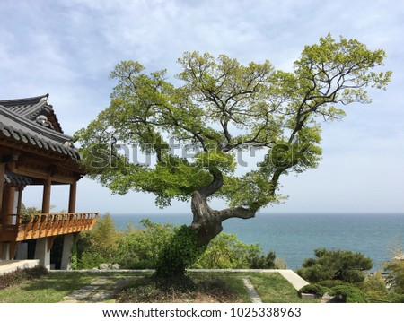 a beautiful pine tree near a traditional Korean building with a view over blue sea