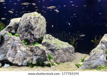 A beautiful professional aquarium with large rocks and many fish - stock photo